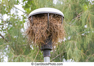 Bird build its nest from dried tree branches inside street lamp with roof in the garden in Bangkok
