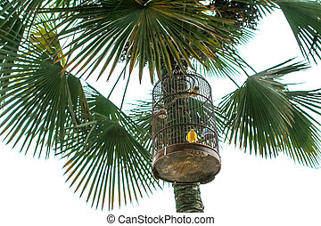 bird cage hanging on a palm tree