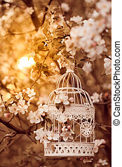Bird cage on the apple blossom tree in evening glow