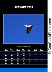 Bird calendar for 2014 - january - Colorful english calendar...