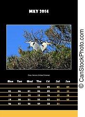 Bird calendar for 2014 - may - Colorful english bird...