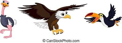 Bird cartoon collection. Ostrich eagle and toucan. Vector illustration.