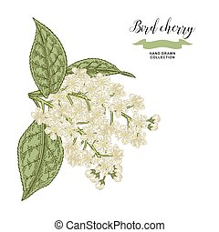 Bird Cherry Illustrations And Clip Art 2 322 Bird Cherry