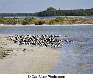 Bird Colony On The Seashore
