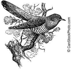 Bird Common Cuckoo on the branch