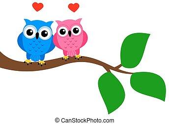 bird couple on branch