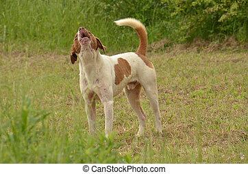 Bird dog - Found here guarding a Southern Georgia farm field...