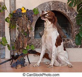 Bird dog - Hunting dog sitting and holding in teeth a bird ...