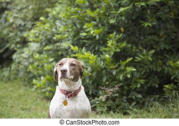 Bird Dog Outdoors - Bird dog outdoors, looking toward the ...