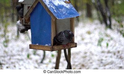 bird dove in a manger