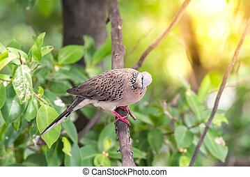 Bird (Dove, Pigeon or Disambiguation) in a nature - Bird (...