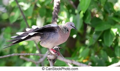 Bird (Dove, Pigeon or Disambiguation) in a nature