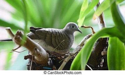 Bird (Dove, Pigeon or Disambiguation) in a nature - Bird...