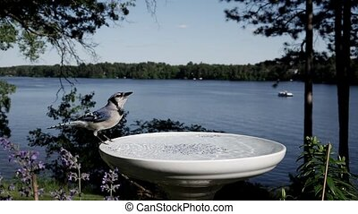 Bird drinks from a bird bath with a lake in the background.
