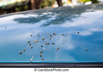 Bird droppings on my ocean blue car.