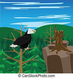 Bird eagle sits on tree