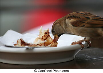 Bird eating from a plate