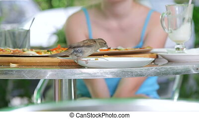 Bird eating pizza from plate in fast food restaurant