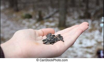 Bird eating sunflower seeds