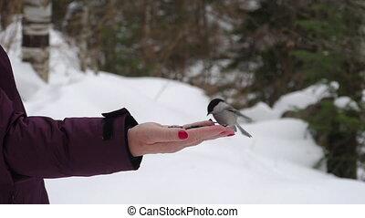 Bird eats sunflower seeds - Nuthatch eats sunflower seeds on...