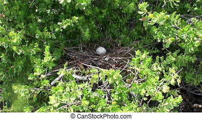 Bird egg in the nest on tropical tree in a rain forest....