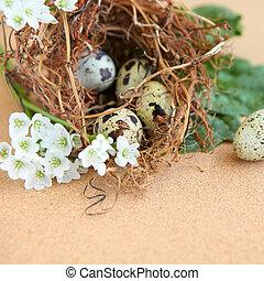 bird eggs in nest.