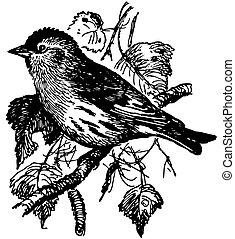 Bird Eurasian Siskin