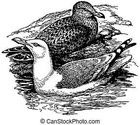 Bird European Herring Gull