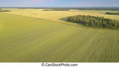 bird eye flight groves wheat fields and forest on horizon -...