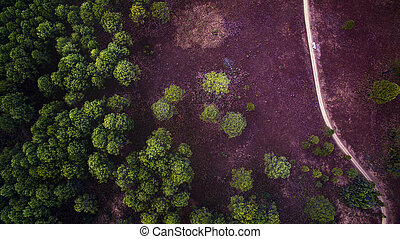 bird eye view of decidous forest field in northern of...