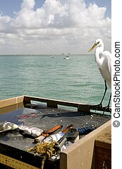 Bird eyes fish cleaning table