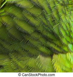 Bird feather, beautiful pattern background