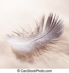 Bird feather close up in pastel colors