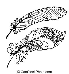 Bird Feather Hand Drawn Illustration