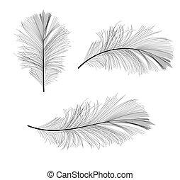 Bird Feather Hand Drawn Vector Illustration