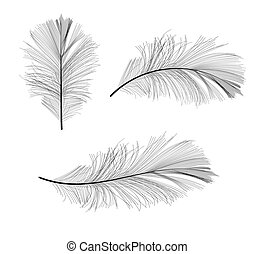 Bird Feather Hand Drawn Vector Illustration