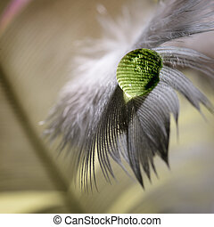 Bird feather with water drops close up