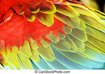 bird feathers - Close up colourful wings of macaw