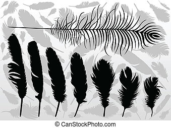 Bird feathers illustration collection background vector
