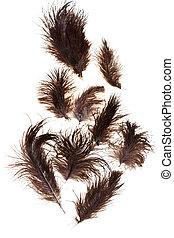 bird feathers - several ostrich feathers on white background...