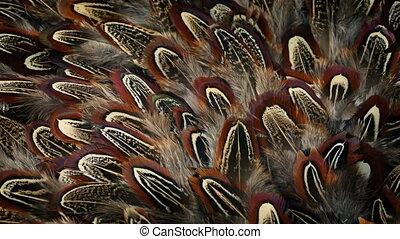 Bird Feathers Rotating Nature Background - Many bird...