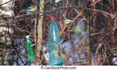 bird feeder hang on branch in winter and tits eat
