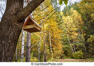 Bird feeder hanging on the tree in autumn