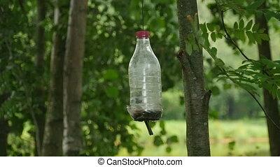 Bird feeder in a garden titmouse pecks seeds slow motion