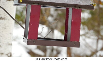 Bird feeder in the park - Birds eating seeds from the...