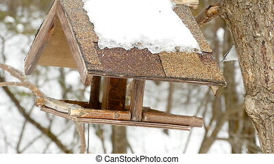Bird feeder in the park - Nuthatch eating seeds from the...