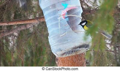 Bird feeder - Birds eating seeds from the feeder.