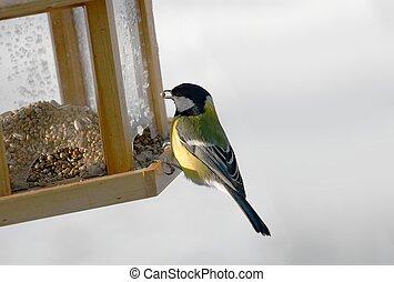 Bird Feeder - Titmouse eating from the bird feeder in winter