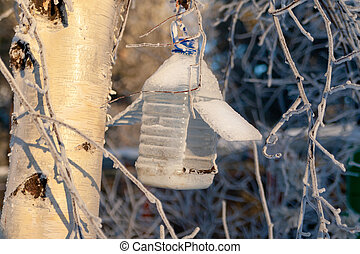 Bird feeder winter hanging on a tree