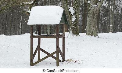 bird feeder winter snow